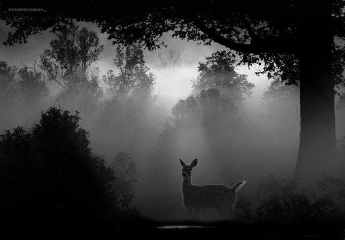 Dawn roe deer